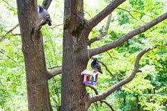 I piccioni si siedono sugli alberi e sull'alimentatore dell'uccello nel parco della città fotografia stock libera da diritti