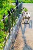 I piccioni si siedono in una linea nel parco Immagine Stock Libera da Diritti