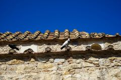 I piccioni sulle mattonelle di tetto di terracotta di vecchia piccola chiesa classica in terra tonificano la parete di pietra nat Immagine Stock Libera da Diritti