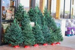 I piccoli alberi di Natale in tensione da vendere fuori di una drogheria degli Stati Uniti con legna da ardere imballata nel fond fotografia stock libera da diritti