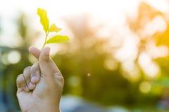 I piccoli alberi stanno sviluppando con amore dalle vostre mani fotografia stock libera da diritti