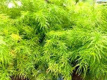 I piccoli alberi verdi stanno sviluppando fotografie stock libere da diritti