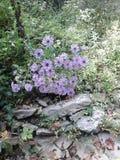 I piccoli fiori Fotografie Stock Libere da Diritti