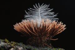I piccoli funghi si chiudono su Fotografia Stock
