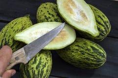 I piccoli meloni acerbi pieni, melone crudo rappresenta, tagliano un piccolo melone con un coltello, mangiano un melone acerbo, p Immagini Stock