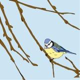 I piccoli uccelli cantano le canzoni. Struttura senza cuciture. Fotografia Stock Libera da Diritti