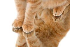 I piedi e la loro riflessione del gatto in uno specchio immagine stock libera da diritti