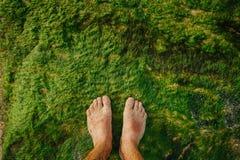 I piedi nudi stanno sulla costa dell'oceano sopra le alghe umide verdi Muschio oceanico sulle rocce Immagini Stock