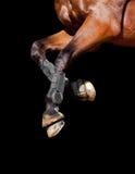 I piedini del cavallo hanno isolato Immagini Stock