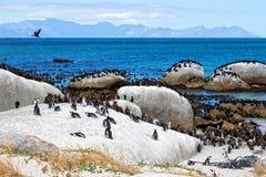 I pinguini africani ai massi tirano, la Sudafrica immagini stock
