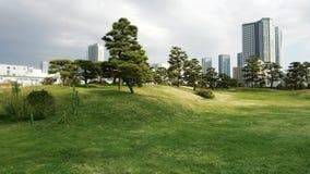 I pini al hamarikyu fa il giardinaggio parco a Tokyo stock footage