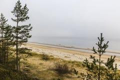 I pini baltici Fotografie Stock Libere da Diritti