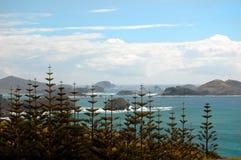 I pini della Norfolk si avvicinano al litorale immagine stock