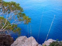 I pini e le pietre si avvicinano al mare Fotografia Stock
