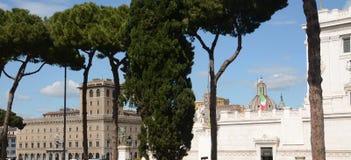 I pini marittimi di Roma Fotografia Stock