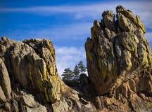 I pini oltre le rocce Fotografia Stock