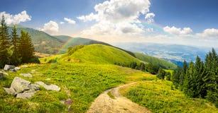 I pini si avvicinano alla valle in montagna Immagine Stock