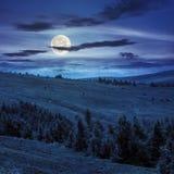 I pini si avvicinano alla valle in montagne sul pendio di collina alla notte Fotografia Stock Libera da Diritti