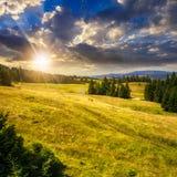 I pini si avvicinano alla valle sul pendio di montagna al tramonto Immagine Stock