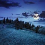 I pini si avvicinano alla valle sul pendio di montagna alla notte Fotografie Stock