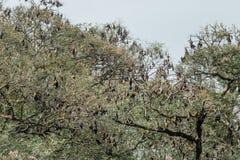 I pipistrelli sull'albero Immagini Stock Libere da Diritti