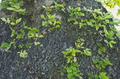 I pochi germogli che crescono dal tronco di albero fotografie stock libere da diritti