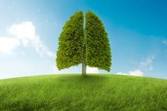 I polmoni di terra Fotografia Stock