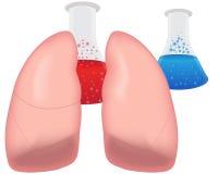 I polmoni ricercano respiratorio Immagini Stock Libere da Diritti