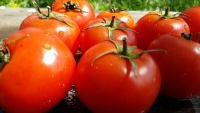 I pomodori cade giri lenti di verdure naturali dell'estate sana della pianta dell'acqua di cadute del gocciolamento stock footage