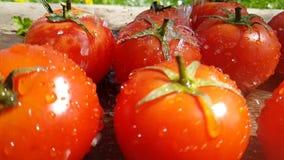 I pomodori cade giri lenti di verdure naturali sani dell'acqua di cadute del gocciolamento stock footage