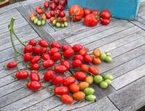 I pomodori di prugna su un gambo hanno messo su una tavola del giardino Fotografie Stock
