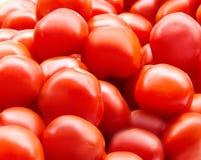 I pomodori maturi freschi rossi si chiudono su nel supermercato Raccolto delle verdure Immagine Stock Libera da Diritti