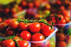I pomodori rossi freschi dello sherry si chiudono su fotografia stock libera da diritti