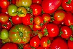 I pomodori rossi, rosa e verdi si chiudono su Fotografie Stock