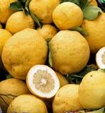 I pompelmi gialli della Sicilia si sono raccolti appena dall'albero fertile o Fotografia Stock Libera da Diritti