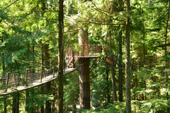 I ponti sospesi della cima d'albero sulla riva del nord di Vancouver Fotografia Stock