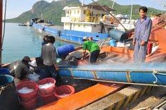 I portatori stanno radendo il ghiaccio al porto marittimo locale dell'isola di Dao di raggiro del Vietnam Fotografie Stock
