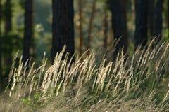 I prati dell'erba si avvicinano al legno Fotografia Stock