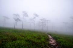 I prati e le abetaie nella stagione delle pioggie sono coperti di FO immagine stock