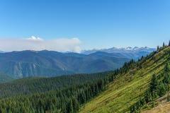 I prati verdi freschi del campo alpino ed i fiori e la montagna di fioritura di verde di foresta completa nei precedenti Fotografia Stock Libera da Diritti