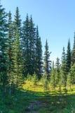 I prati verdi freschi del campo alpino ed i fiori e la montagna di fioritura di verde di foresta completa nei precedenti Immagini Stock Libere da Diritti