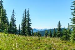 I prati verdi freschi del campo alpino ed i fiori e la montagna di fioritura di verde di foresta completa nei precedenti Immagini Stock