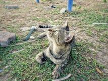 I precedenti animali Fotografie Stock Libere da Diritti