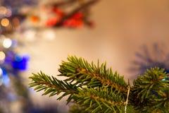 I precedenti astratti degli alberi di Natale del ramo Fotografie Stock Libere da Diritti