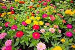 I precedenti confusi dei fiori variopinti in parco Immagini Stock