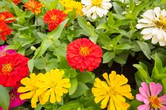 I precedenti dei fiori variopinti in parco Immagine Stock Libera da Diritti