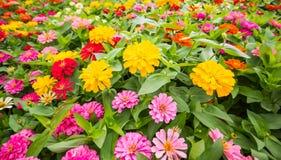 I precedenti dei fiori variopinti in parco Fotografie Stock Libere da Diritti