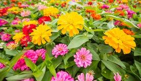 I precedenti dei fiori variopinti in parco Fotografie Stock