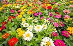 I precedenti dei fiori variopinti in parco Immagini Stock Libere da Diritti