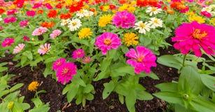 I precedenti dei fiori variopinti in parco Fotografia Stock Libera da Diritti